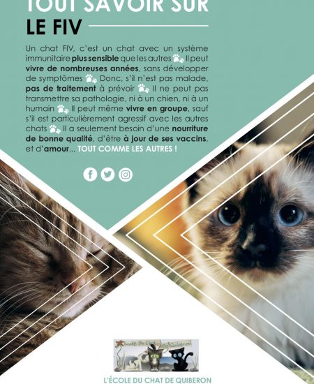 AFFICHE FIV - copie