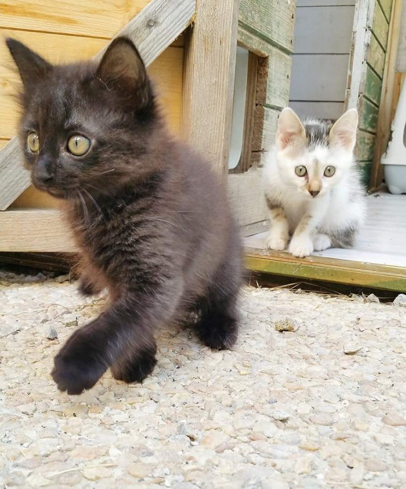 Ness et Tanaris