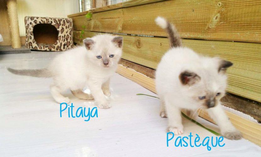 pitaya pasteque