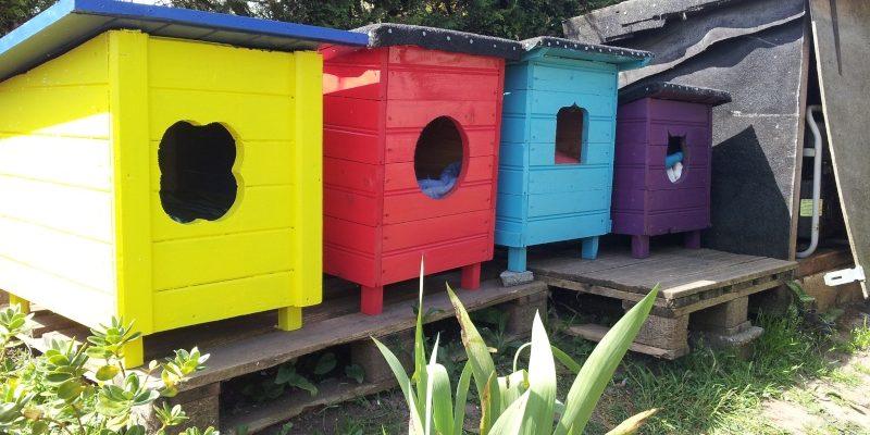 Maisons des chats vivant à l'extérieur